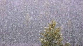 Снег падая против предпосылки леса акции видеоматериалы