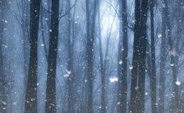 Снег падает в мистический одичалый лес стоковое изображение rf