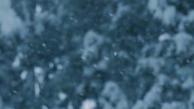 Снег падает от зеленых threes сосен, снежинок танцуя в замедленном движении, пасмурной погоде зимы видеоматериал