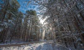 Снег падает от покрытых сосен - красивых лесов вдоль сельских дорог Стоковые Изображения RF