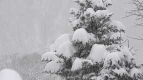 Снег падая на дерево, в Toyama, Япония сток-видео