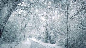 Снег падая на дорогу через древесины видеоматериал