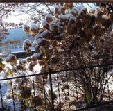 Снег падения Стоковые Изображения