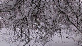 Снег покрыл ветви, лес зимы видеоматериал