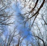 Снег покрыл ветви сосны на солнечной зиме в лесе стоковое изображение rf
