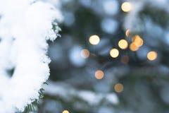 Снег покрыл ветвь рождества Beautyful ели Стоковая Фотография RF