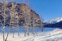Снег покрыл деревья березы выравнивая дорогу сельской местности, сцену зимы Солнечный холодный день Стоковая Фотография RF