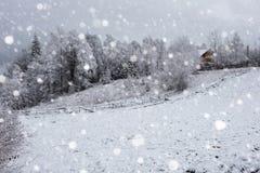Снег покрыл деревья и тяжелый идти снег в горах Стоковая Фотография
