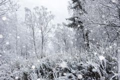 Снег покрыл деревья и тяжелый идти снег в горах Стоковое Изображение