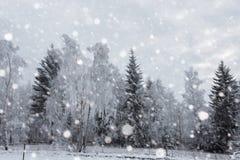 Снег покрыл деревья и тяжелый идти снег в горах Стоковые Фото