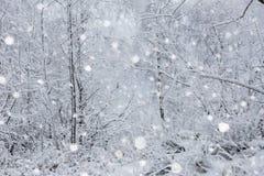 Снег покрыл деревья и тяжелый идти снег в горах Стоковая Фотография RF
