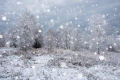Снег покрыл деревья и тяжелый идти снег в горах Стоковое Изображение RF
