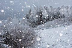 Снег покрыл деревья и тяжелый идти снег в горах Стоковые Изображения RF
