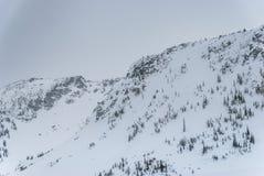 Снег покрыл деревья на верхней части горы Стоковое фото RF