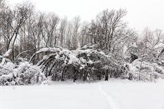 Снег покрыл деревья стоя на краю леса стоковые изображения rf