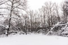 Снег покрыл деревья стоя на краю леса стоковое фото