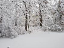 Снег покрыл лес стоковые изображения
