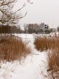 Снег покрыл понтон около озера при тростники, который замерли зимний день стоковое фото rf
