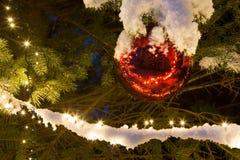 Снег покрыл сосну с освещением и красным орнаментом рождества стеклянного шарика, на открытом воздухе стоковая фотография