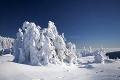 Снег покрыл сосны в высоких горах Стоковые Изображения RF
