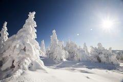 Снег покрыл сосны в высоких горах Стоковые Фото
