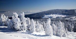 Снег покрыл сосны в высоких горах Стоковое фото RF
