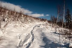Снег покрыл тропу с немногими деревьями вокруг и голубое небо с облаками Стоковая Фотография RF