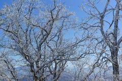 Снег покрыл черные ветви деревьев против голубого неба Стоковые Фото