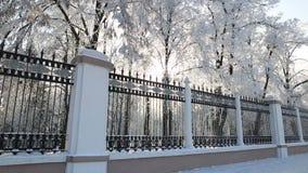 снег-покрытые деревья и высоко обнести парк против голубого неба сток-видео
