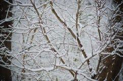 Снег покрыл ветви дерева зимы Стоковые Изображения RF