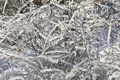 Снег покрыл ветви деревьев и кустов на солнечный день Стоковые Изображения