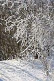 Снег покрыл ветви деревьев и кустов на солнечный день Стоковое фото RF