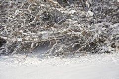 Снег покрыл ветви деревьев и кустов на солнечный день Стоковые Фото