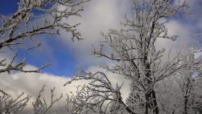 Снег покрыл деревья, белые облака, голубое небо и горы видеоматериал