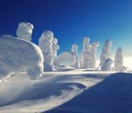 Снег покрыл деревья против яркого, голубого неба Стоковое фото RF
