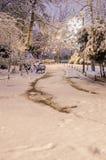 Снег покрыл парк на ноче Стоковая Фотография