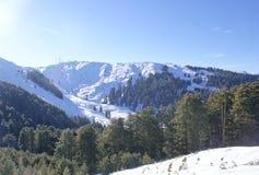 Снег покрыл пики Гималаев на Patnitop с сосновыми лесами Стоковое Изображение RF