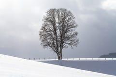 Снег покрыл поле и дерево на горизонте Стоковые Изображения