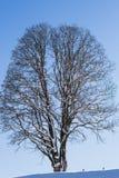 Снег покрыл поле и дерево на горизонте стоковое изображение rf