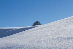 Снег покрыл поле и дерево на горизонте стоковая фотография