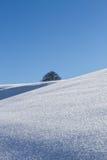 Снег покрыл поле и дерево на горизонте Стоковые Фотографии RF