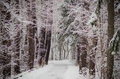 Снег покрыл путь зимы Стоковая Фотография RF