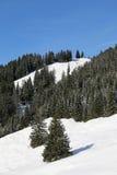 Снег покрыл древесины в горах в зиме Стоковые Фото