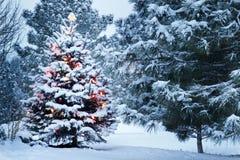 Снег покрыл рождественскую елку стоит вне ярко в свете раннего утра