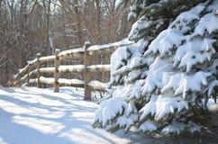 Снег покрыл сосну и загородку стоковые фото