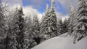 Снег покрыл сосны, белые облака, голубое небо в горах сток-видео