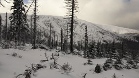 Снег покрыл сосны, белые облака и горы сток-видео