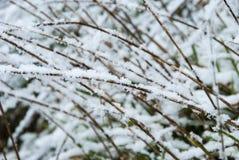 Снег покрыл траву Стоковое Фото