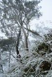Снег покрыл траву стоковая фотография rf