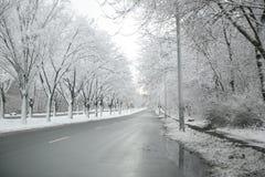 Снег покрыл улицу линии деревьев Стоковое Изображение